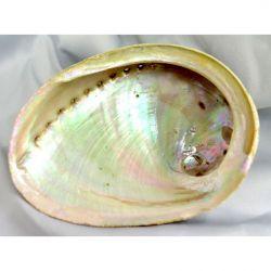 Abalone Shell Large